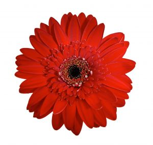 Red flower random act of kindness